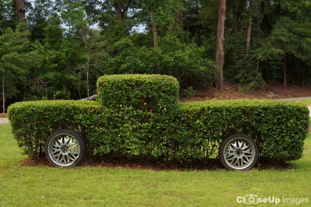 Truck made out of Bushes
