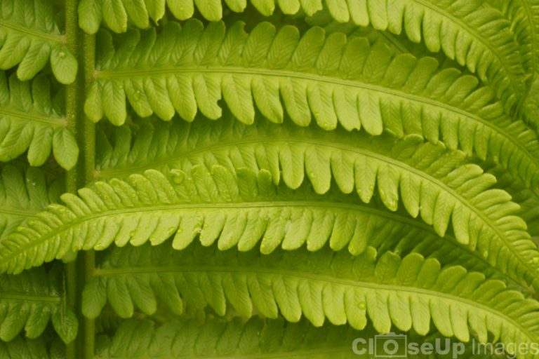 Close-Up of a fern by CloseUp Images